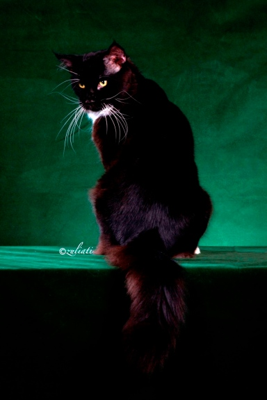 1Malaysia Cat Show-127-42