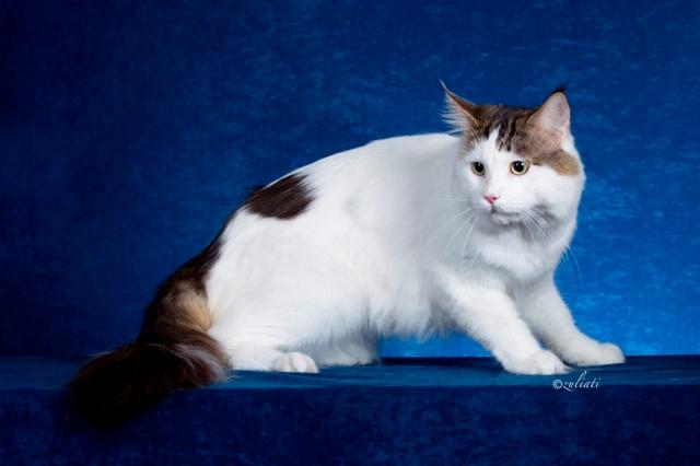 1Malaysia Cat Show-351-12